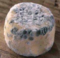 how to eat crottin de chavignol