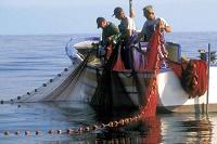 Fermo Pesca