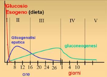 Digiuno - Glucosio
