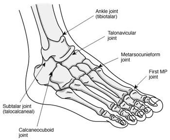 left foot bone diagram - photo #15