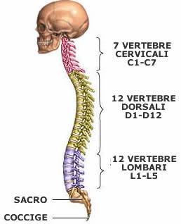 Mal di schiena nel campo di reparto di petto di un trattamento di spina dorsale