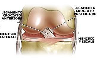 Menischi e legamenti del ginocchio