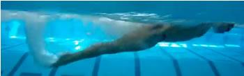 Tecnica delfino